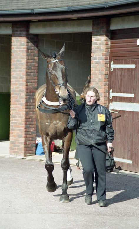 Racehorse Sir Rembrandt with Jockey Andrew Thornton